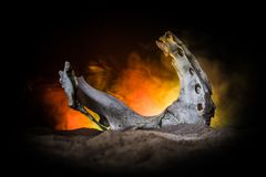Animal bone in dark Halloween night with fog and light on background / Selective focus and space for text. Abstract horror concept stock photo