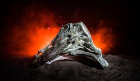 Animal bone in dark Halloween night with fog and light on background / Selective focus and space for text. Abstract horror concept royalty free stock photography