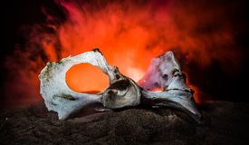 Animal bone in dark Halloween night with fog and light on background / Selective focus and space for text. Abstract horror concept royalty free stock photos