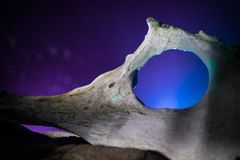 Animal bone in dark Halloween night with fog and light on background / Selective focus and space for text. Abstract horror concept stock photography