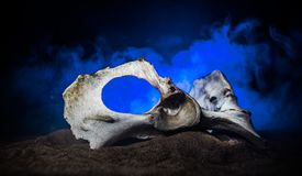 Animal bone in dark Halloween night with fog and light on background / Selective focus and space for text. Abstract horror concept stock photos