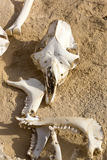Animal bones Stock Photo