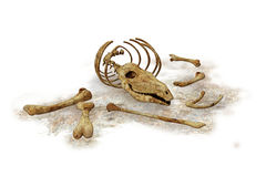 Animal bones Stock Photos