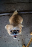 Animal bonito Foto de Stock Royalty Free