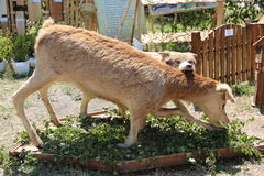 Animal bourré Photographie stock libre de droits
