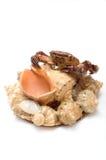 Animal bourré d'un crabe sur des coquilles de coque Photographie stock libre de droits