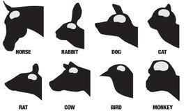 Animal Brain Sizes royalty free illustration