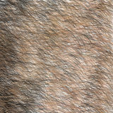 Animal Brown and Black Fur Texture. Short Hair. Royalty Free Stock Photo