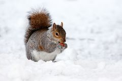 Animal, Brown, Cold, Creature, Cute Stock Photos