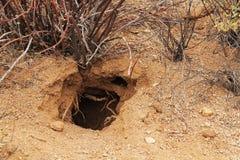 Animal Burrow in the Sonoran Desert. In Saguaro National Park, Tucson, Arizona, USA stock images