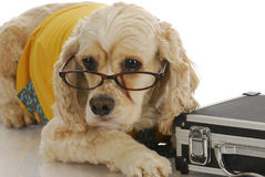 Animal business Stock Image