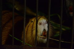 Animal. Cage,cell, loneliness, despair, confinement, dirty walls,expectation, gloominess, tranquility, mud, smell.nin this photo the animal is in captivity. the Stock Photo