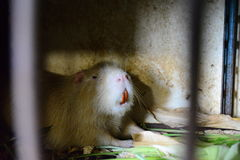 Animal. Cage,cell, loneliness, despair, confinement, dirty walls,expectation, gloominess, tranquility, mud, smell.nin this photo the animal is in captivity. the Stock Image