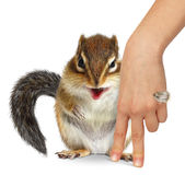 Animal care concept, squirrel hugs human hand Royalty Free Stock Photo