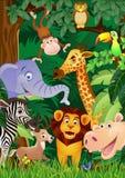 Animal cartoon Stock Images