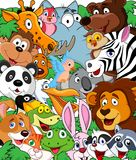 Animal cartoon background Stock Photo