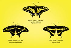 Butterfly King Swallowtail Set Vector Illustration Royalty Free Stock Photos