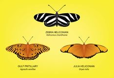 Butterfly Zebra Heliconian Set Vector Illustration Royalty Free Stock Photos