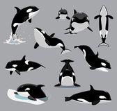 Orca Killer Whale Poses Cartoon Vector Illustration Stock Images