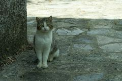 Animal, Cat, Face Stock Photography