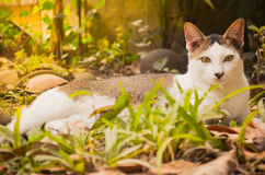 Animal cat. Cat in gaden cute animal Stock Photography