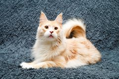 Animal cat at home Stock Image