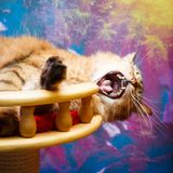 Animal cat at home Stock Images