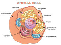 Animal cell Stock Images