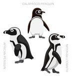 Bird African Penguin Set Cartoon Vector Illustration Stock Photography