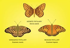 Butterfly Fritillary Set Vector Illustration Stock Photos