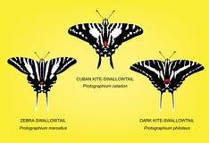 Butterfly Swallowtail Set Vector Illustration Stock Photos