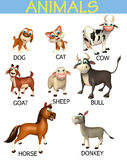 animal chart Stock Image
