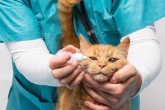 Animal clinic - cat becomes drops for eyes Stock Photo