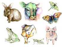 Animal Clip Art. Hand drawn clip art of a bunny, cow, frog, pig, goose, butterfly, and luna moth Stock Photography