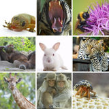 Animal collage. Animal theme photo collage composed of few images stock photos