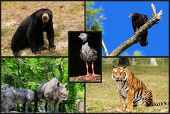 Animal Collage Royalty Free Stock Photo