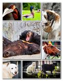 Animal collage. With various species Stock Images