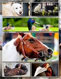 Animal collage. With various species Royalty Free Stock Image