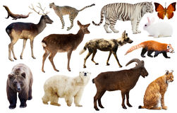 Animal collection asia Stock Image