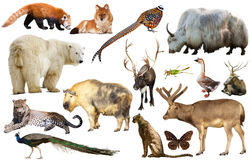 Animal collection asia Stock Photography
