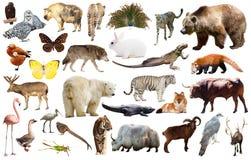 Animal collection asia Stock Photos