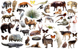 Animal collection asia Stock Photo