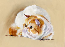 Animal Collection: Cat. Beautiful watercolor Royalty Free Stock Photo