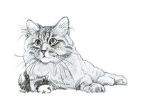 Animal Collection: Cat. Beautiful watercolor Royalty Free Stock Images