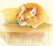 Animal Collection: Cat. Beautiful watercolor Stock Images