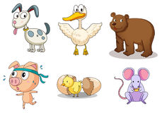 Animal collection Stock Images