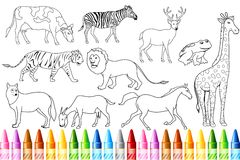 Animal Color Book vector illustration