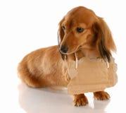Animal communication Stock Image