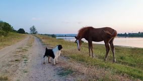 Animal communication concept as a young foal and a pup exchanging glances and expressions. Mammal body language as dog and horse i