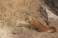 Animal, Conservation, Daylight Royalty Free Stock Photography